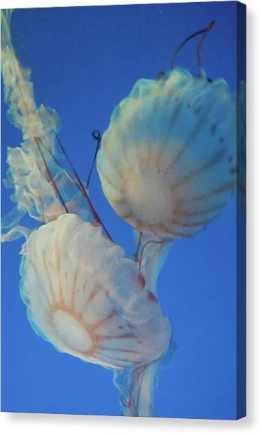 Jelly Fish Canvas Print by Samantha Kimble