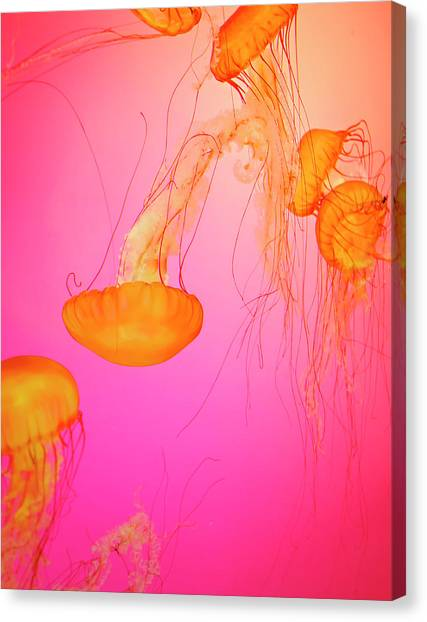 Jelly Fish Canvas Print by Tricia S. Schumacher