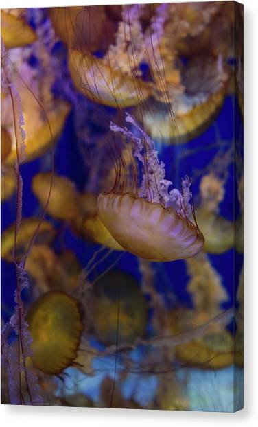 Under The Moon Canvas Print - Jellyfish 5 by Ariane Moshayedi