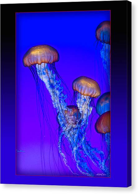 Jellyfish Floating Up Canvas Print