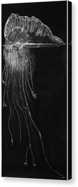 Jellyfish With Cords Canvas Print by Elizabeth Comay