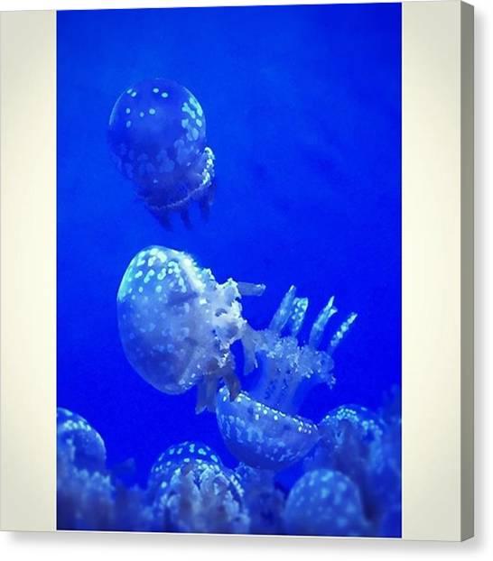 Aquariums Canvas Print - Jellyfishes #aquarium #water #iphone6 by Joan McCool
