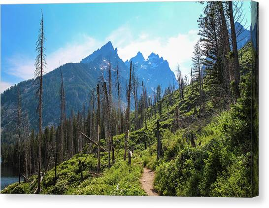 Jenny Lake Trail Canvas Print