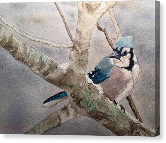 Cold Winter's Jay Canvas Print
