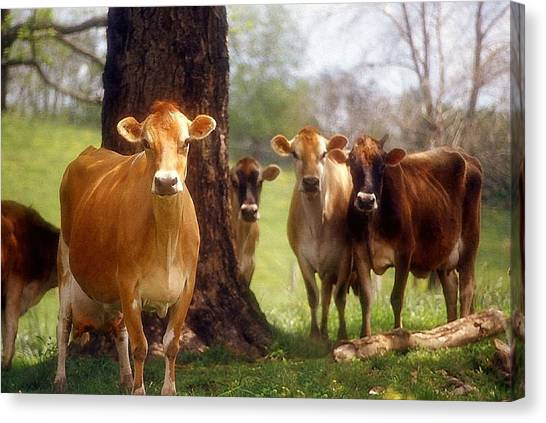 Jersey Lookers Canvas Print