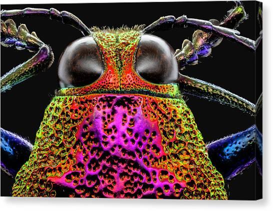 Jewel Beetle 3x Canvas Print