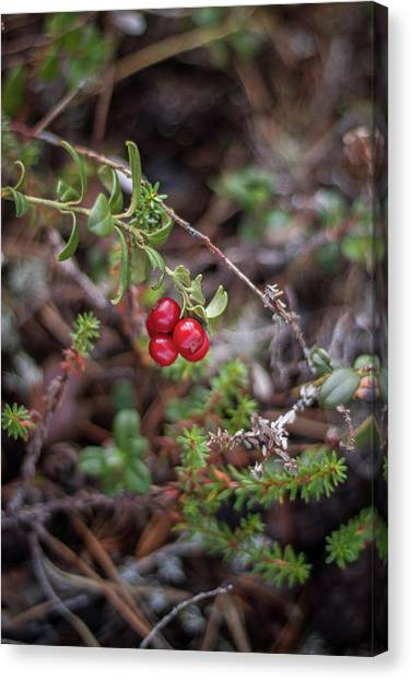Canvas Print - Jewels In The Forest by Jo Jackson