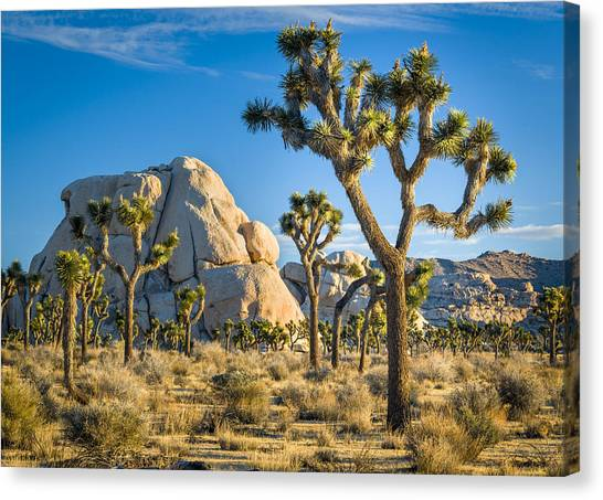 Joshua Tree And Intersection Rock Canvas Print