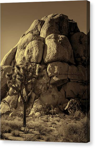 Mojave Desert Canvas Print - Joshua Tree And Rock Pile - Sepia by Stephen Stookey