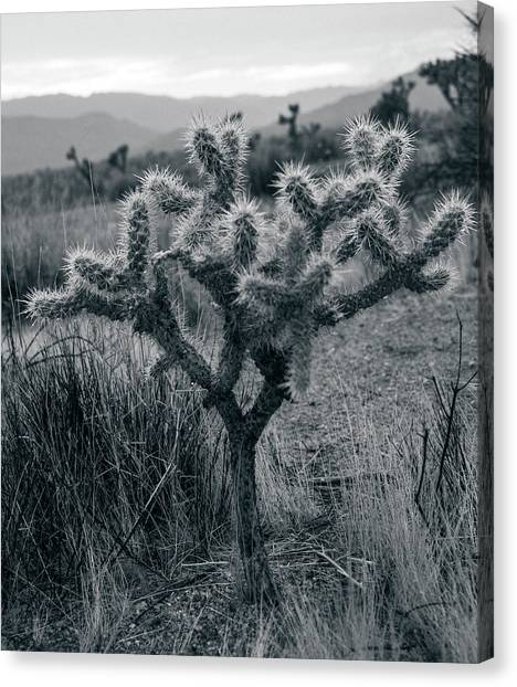 Joshua Tree Cactus Canvas Print