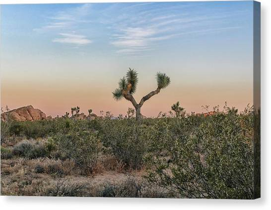 Canvas Print featuring the photograph Joshua Tree Evening by Alison Frank