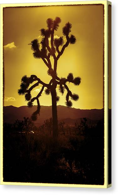 Mojave Desert Canvas Print - Joshua Tree Glow #2 by Stephen Stookey
