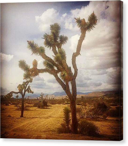 Famous Artists Canvas Print - Joshua Tree. #photographer #photo by Alex Snay