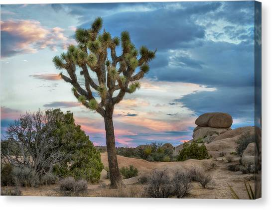 Mojave Desert Canvas Print - Joshua Tree Sunrise by Dave Dilli