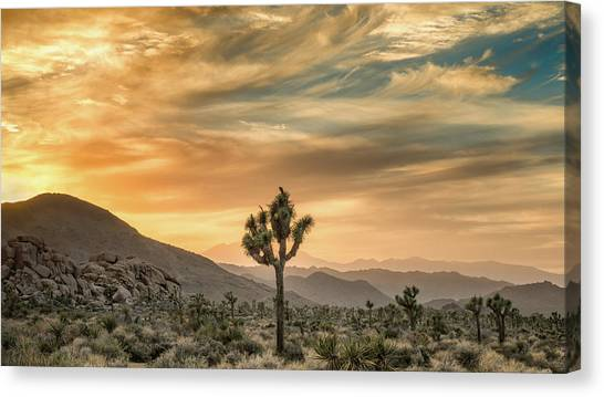 Mojave Desert Canvas Print - Joshua Tree Sunrise by Joseph Smith