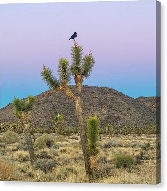 Mojave Desert Canvas Print - Joshua Tree With Crow by Joseph Smith