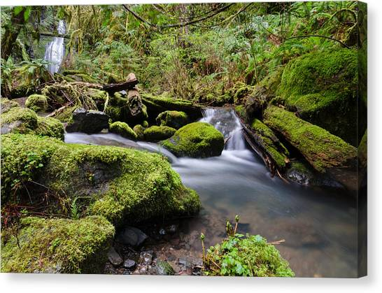 University Of Oregon Uo Canvas Print - Journey Downstream by Margaret Pitcher