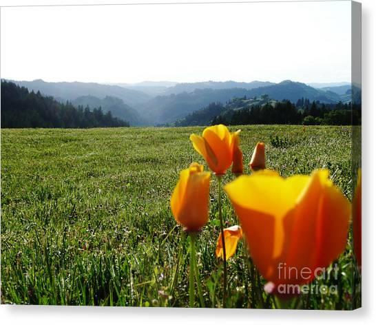 Jubilant Poppies Canvas Print by JoAnn SkyWatcher