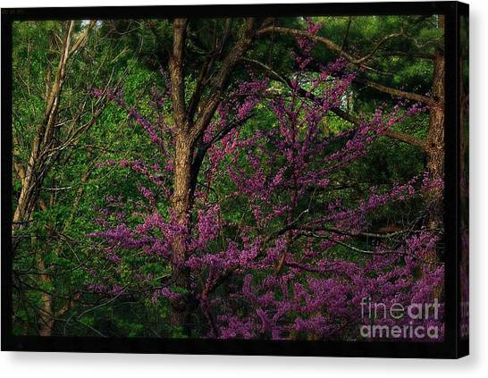 Judas In The Forest Canvas Print