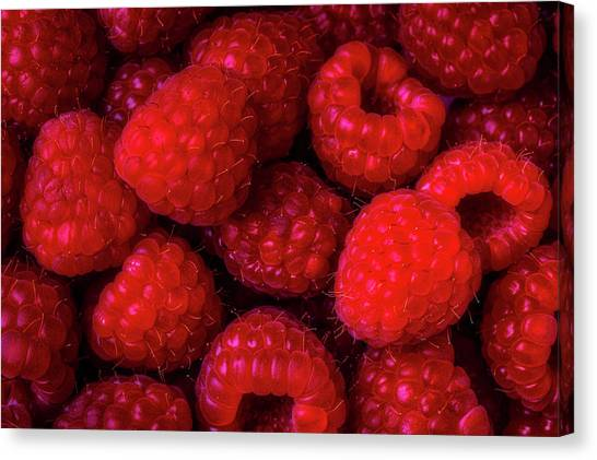 Raspberries Canvas Print - Juicy Red Raspberries by Garry Gay