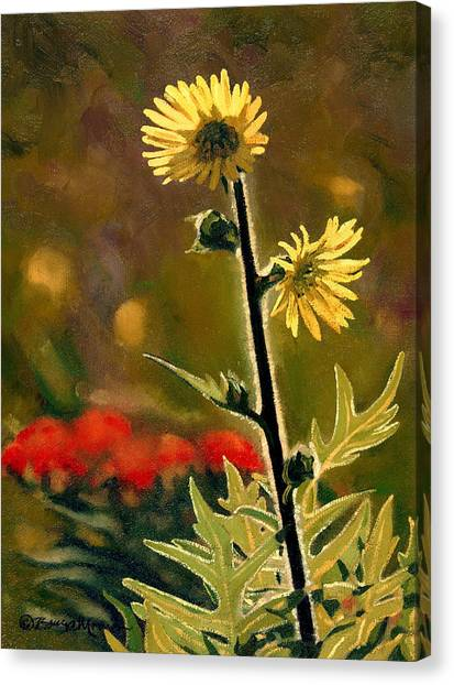 July Afternoon-compass Plant Canvas Print