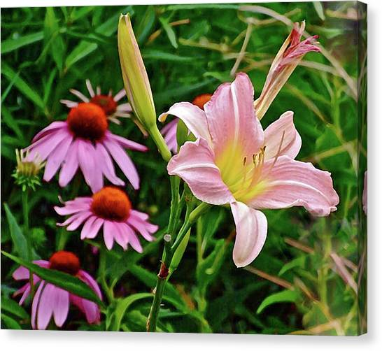 July Lily #10 Canvas Print
