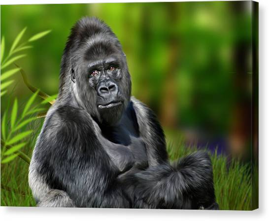 Primates Canvas Print - Jumbo by Julie L Hoddinott