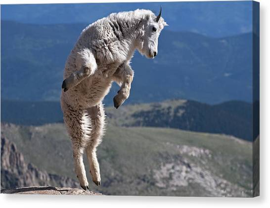 Canvas Print featuring the photograph Jump by Gary Lengyel