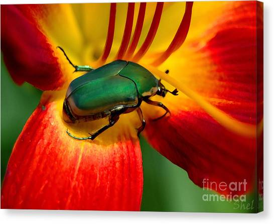 Little Things Canvas Print - Junebug Daylily by Michele Hancock