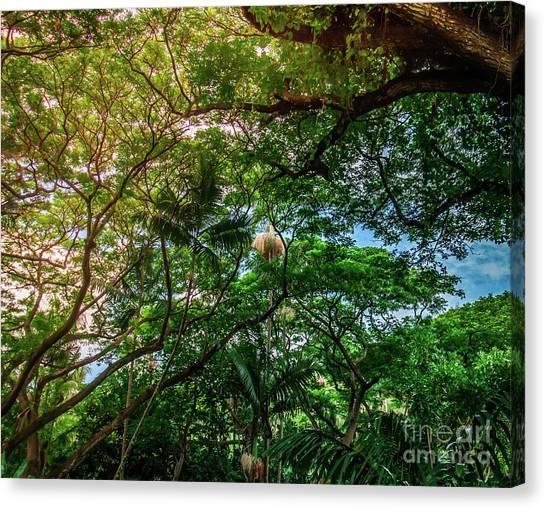 Jungle Canopy Kauai Hawaii Canvas Print by Blake Webster