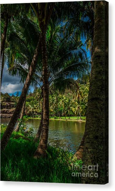 Jungle River Palms Kauai Canvas Print