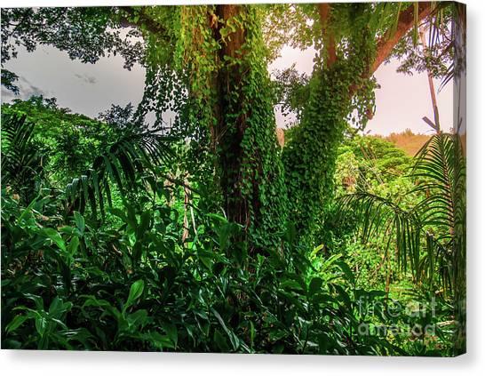 Jungle Vines Kauai Hawaii Canvas Print by Blake Webster