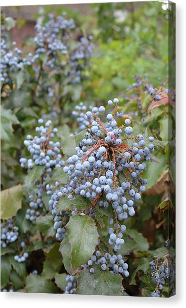 Gin Canvas Print - Juniper Berries by Jeremy Tamsen