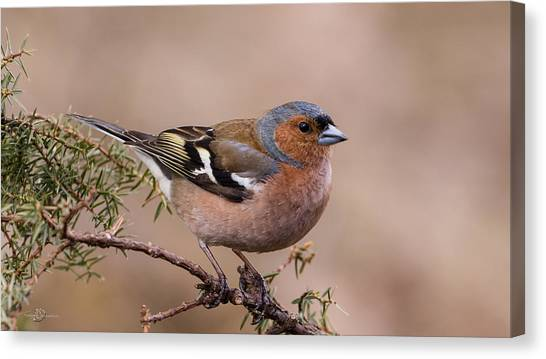 Juniper Bird Canvas Print