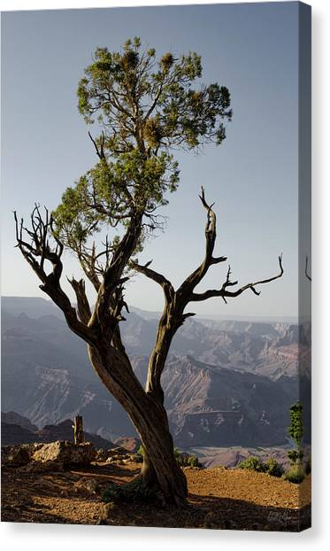 Juniper Tree At Grand Canyon II Canvas Print