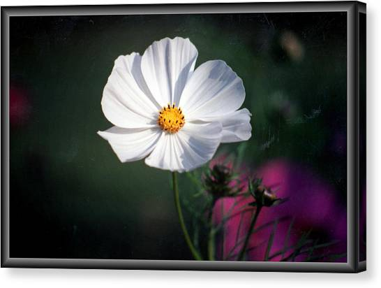 Just A Cosmos Canvas Print by Russ Mullen