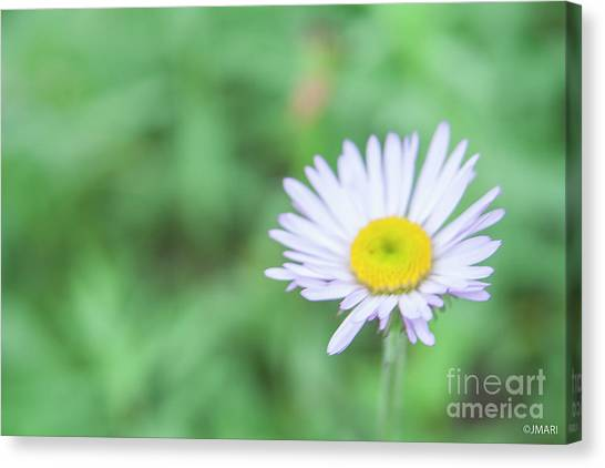 Just A Little Sunshine Canvas Print