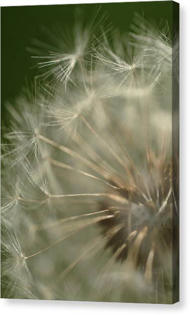 Just A Weed Canvas Print