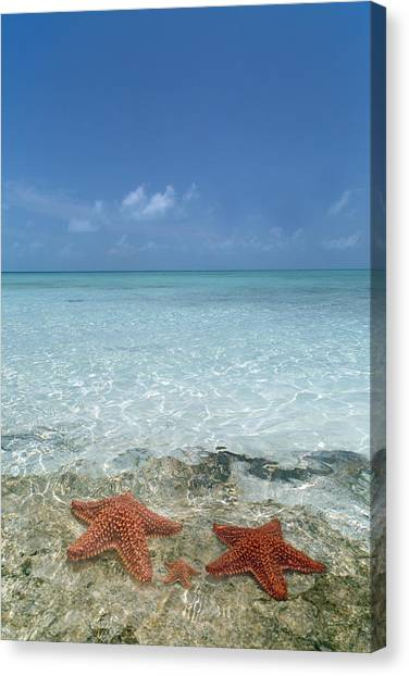 Carribbean Canvas Print - Just Between Us by Betsy Knapp