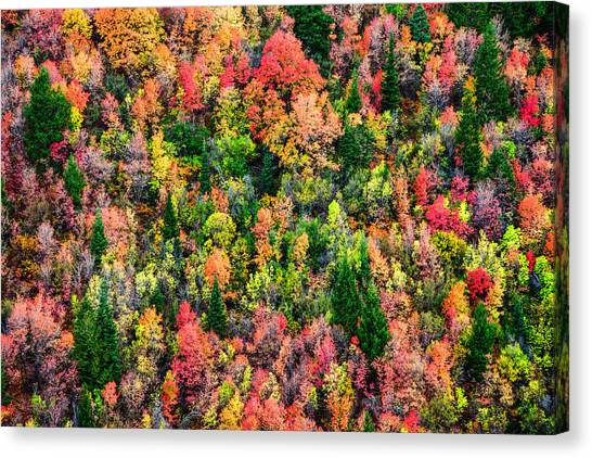 Wilderness Canvas Print - Just In Time by Chad Dutson