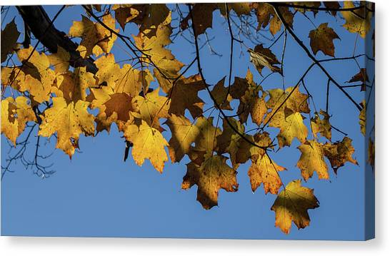 Just Leaves Canvas Print