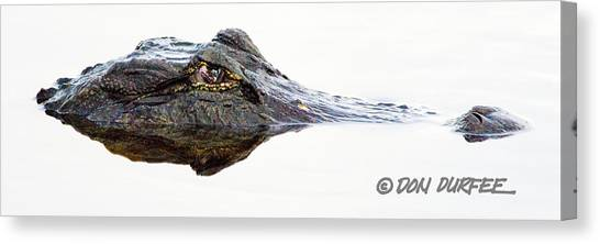 Canvas Print - Just Looking by Don Durfee