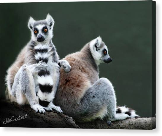 Ring-tailed Lemur Canvas Print - Just Lovin This Tall Tail by Julie L Hoddinott
