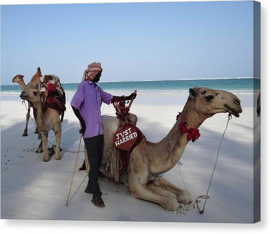 Exploramum Canvas Print - Just Married Camels Kenya Beach 2 by Exploramum Exploramum