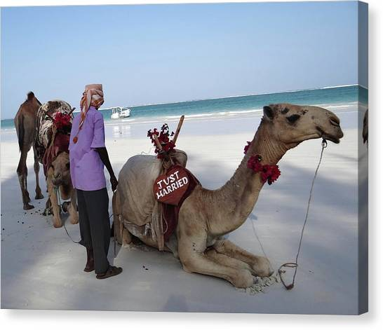Exploramum Canvas Print - Just Married Camels Kenya Beach by Exploramum Exploramum