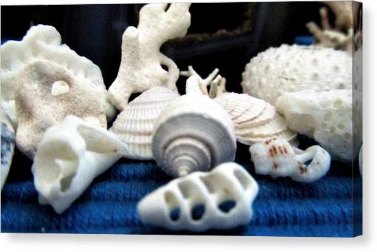 Just White Seashell 1 Canvas Print