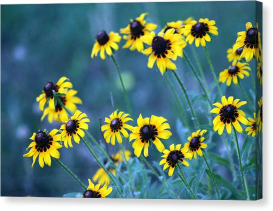 Canvas Print - Just Wild by Evelyn Patrick