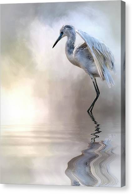 Juvenile Heron Canvas Print