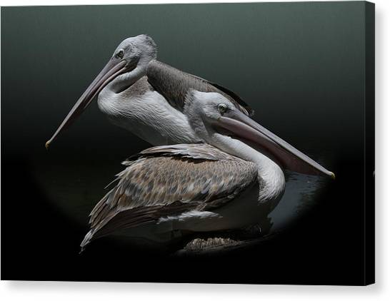Juxtaposition - Pelicans Canvas Print