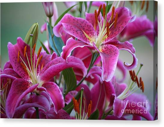 K And D Lilly 4 Canvas Print